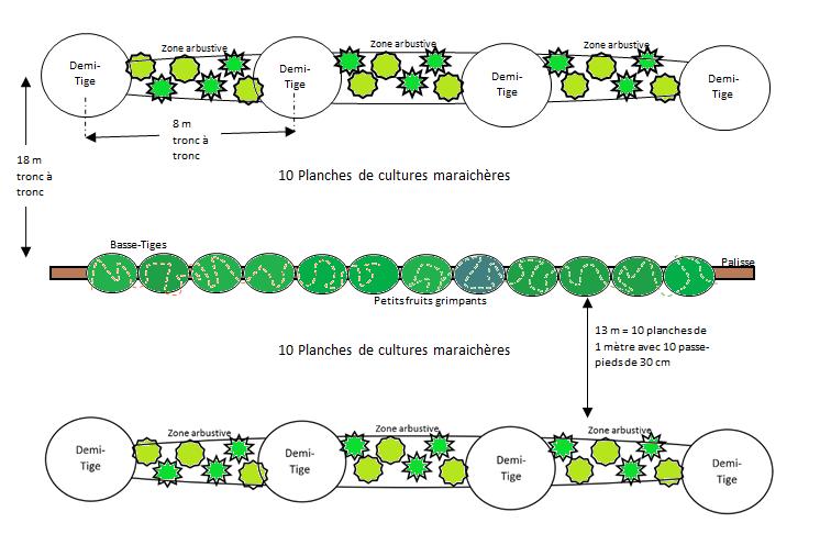 deux types de culture de fruitiers sont envisagées des haies fruitieres de basses tige avec production de petits fruits et baies, et altenance d'arbres de demi-tige et de zones arbustives