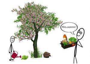 Parrainer-arbre-fruitier